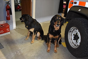 Oldham mountain rescue dogs